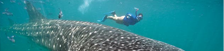 Swimming with Whale Sharks,Smithsonian paper
